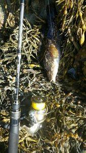 Vieille Commune — Abzhc Fishing