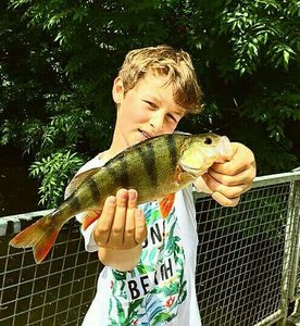 European Perch — Open Fishing  ---------