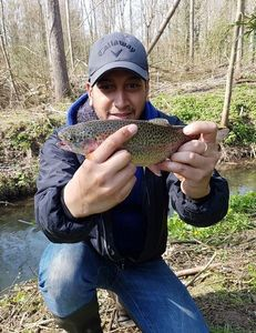 Rainbow Trout — Ben Rabay