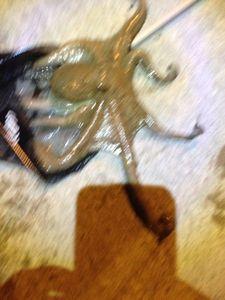 Common Octopus — Benjamin Dubois