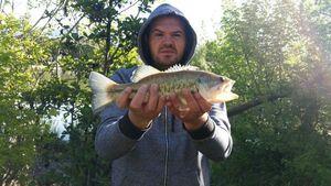 Largemouth Bass — Alcaraz  Fabrice