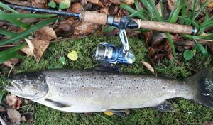 Brown Trout — Davayat63