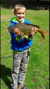 Common Carp — Kylian Favreau