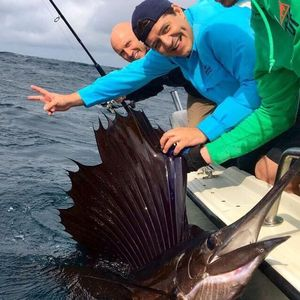 Atlantic Sailfish — Luis Diaz