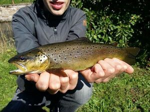 Brown Trout — Marin Rossner