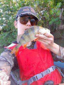 European Perch — Kr Fishing