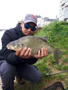 Common Bream — Tony Sam