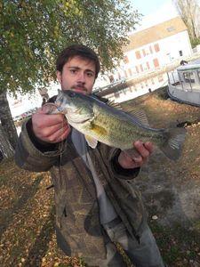 Largemouth Bass — Romain Marthien