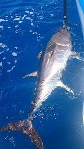 Bluefin Tuna — Pascal Antona