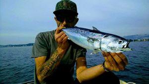 Bonite du Pacifique — Vincent  Vezzoso