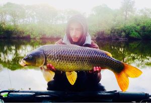 Common Carp — Corentin Delourme