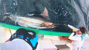 Blue Marlin (Atlantic)