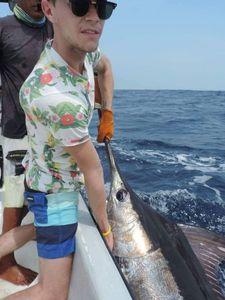 Marlin Bleu du Pacifique — Alexis Braynas