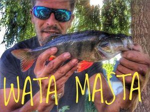 European Perch — Douving Fishing