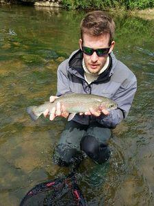 Rainbow Trout — Rem Choco