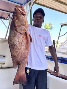 African Red Snapper — Thom Cog