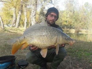 Common Carp — Julien Clemence