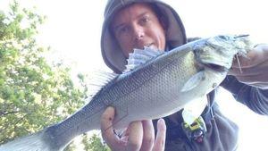 European Bass (Seabass) — Pierre Menesguen