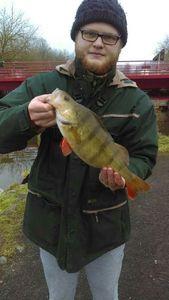 European Perch — Damien carnafishing59