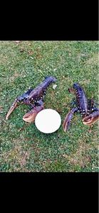 European Lobster — Yann Chopin
