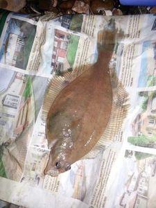 European Flounder — Eddie Killick