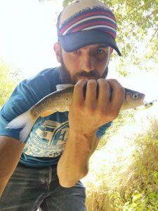 Chub — Ju Fisherman