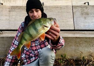Perche Commune — Sacha Bosman Fishing
