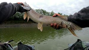 Northern Pike — Nicolas Puaud