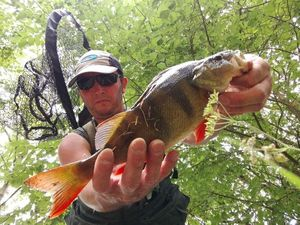 European Perch — Fredefrede Thouars