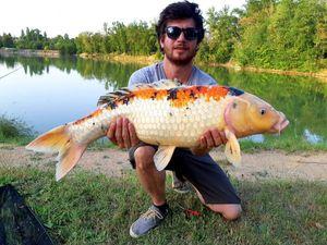 Koï Fish — Sebastiendlh Dlh