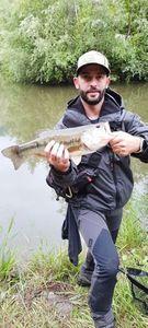 Largemouth Bass — Pierre Philippot