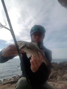 European Bass (Seabass) — Jim Lucas