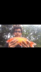 Koï Fish — Fishing Porquerolles