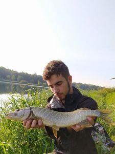 Northern Pike