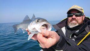 European Bass — Gael Even