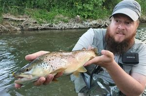 Brown Trout — Laurent Picard