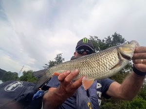 Chub — Monster Carna