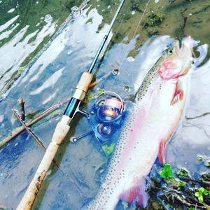 Rainbow Trout — Léo Andry