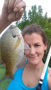 Green Sunfish — Dana Snyder