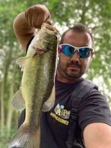 Largemouth Bass — Florian Matilla