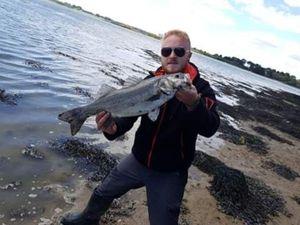 European Bass (Seabass) — Adonis  MANGOS