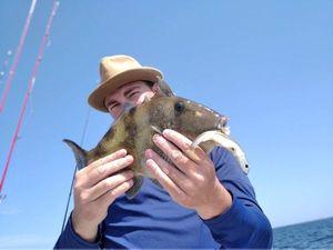 Triggerfish — Antony Shelby