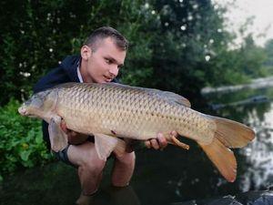 Common Carp — Clément Priou