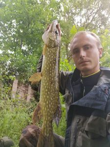 Northern Pike — Pierre-Yves DVN