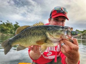 Largemouth Bass — Vincent Lopez