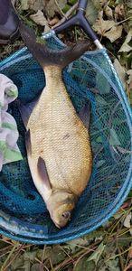 Common Bream — Ianis_fishingbuffs