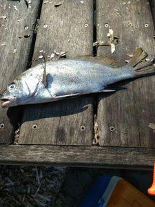 Corb — Côme rockfishing