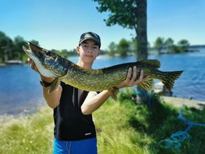 Northern Pike — Tom Saget