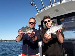 European Bass (Seabass) — fishiscoming fr