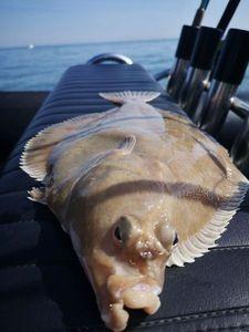 European Plaice — Tynilla Fishing